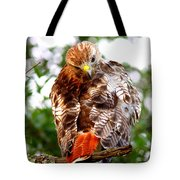Img_1050-002 - Red-tailed Hawk Tote Bag