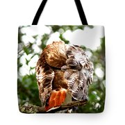 Img_1049-006 - Red-tailed Hawk Tote Bag