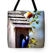 Img_1154 - Eastern Bluebird Tote Bag