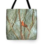 Img_1273-003 - Northern Cardinal Tote Bag