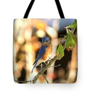 Img_145-005 - Eastern Bluebird Tote Bag
