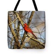 Img_2757-001 - Northern Cardinal Tote Bag