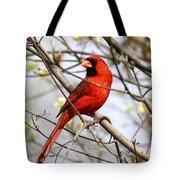 Img_2902-004 - Northern Cardinal Tote Bag