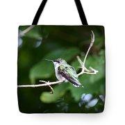 Img_3309 - Ruby-throated Hummingbird Tote Bag