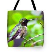 Img_3524-002 - Ruby-throated Hummingbird Tote Bag