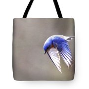 Img_4138-003 - Eastern Bluebird Tote Bag