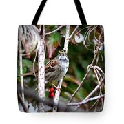 Img_6624-002 - White-throated Sparrow Tote Bag