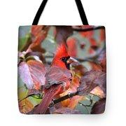 Img_ 8621 - Northern Cardinal Tote Bag