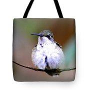 Img_8835 - Ruby-throated Hummingbird Tote Bag