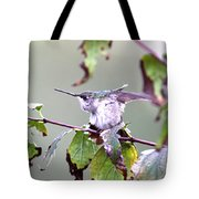 Img_9114-003 - Ruby-throated Hummingbird Tote Bag
