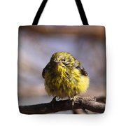 Img_9853 - Pine Warbler -  Very Wet Tote Bag
