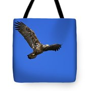 Immature Bald Eagle Fly By Tote Bag
