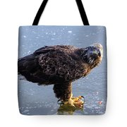 Immature Eagle Having Lunch Tote Bag