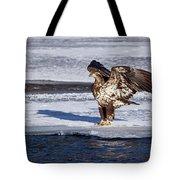 Immature Eagle On Ice Tote Bag