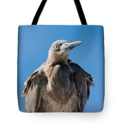Immature Reddish Egret Tote Bag