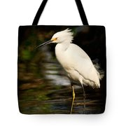 Immature Snowy Egret Tote Bag