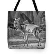Impala    Black And White Tote Bag