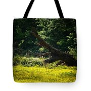 In A Field Of Gold Tote Bag