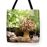 In Hiding - Morel Mushroom Tote Bag