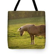 In The Light Of The Evening Sun Tote Bag