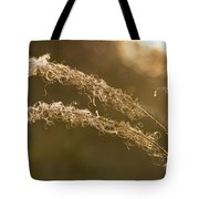 In The Sunset Light Tote Bag