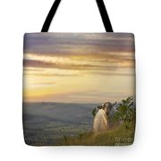 In The Warm Evening Sunlight  Tote Bag