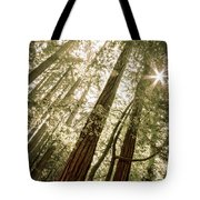In The Woods 3 Tote Bag