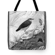 India: Water Ouzels Tote Bag