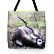 Indian Antelope Tote Bag