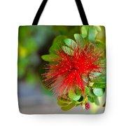 Indian Bottlebrush Flower Tote Bag