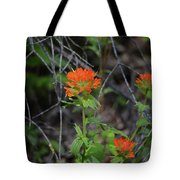 Indian Paint Brush 2 Tote Bag