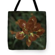 Indian Paint Brush Tote Bag