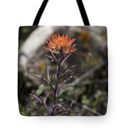 Indian Paintbrush 7 Tote Bag