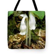 Indian Pipes - Monotropa Uniflora Tote Bag