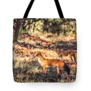 Indian Wild Dogs Dholes Kanha National Park India Tote Bag