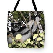 Indri Indri Tote Bag