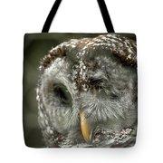 Injured Owl Tote Bag