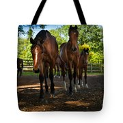 Inquisitive Horses Tote Bag