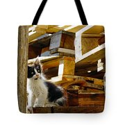 Inquisitive Kitten On The Greek Island Of Mykonos Tote Bag