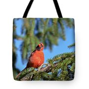 Inquisitive Male Cardinal Tote Bag
