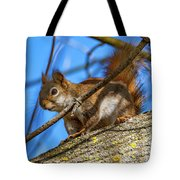 Inquisitive Squirrel Tote Bag