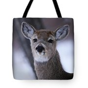 Inquisitive Yearling Tote Bag