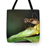 Insect And Morning Dew Tote Bag