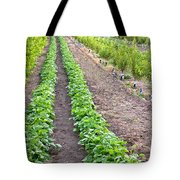 Intercropped Trees And Beans Tote Bag