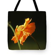 Into The Sunlight Tote Bag