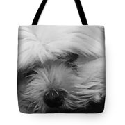Ira Missed His Mommy  Tote Bag