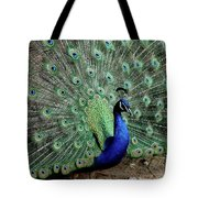 Iridescent Blue-green Peacock Tote Bag