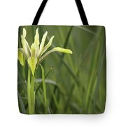 Iris Palaestina Tote Bag