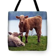 Irish Calves At Lough Eske Tote Bag