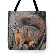 Irritated Squirrel Tote Bag